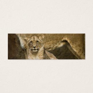 Lion Mini Business Card
