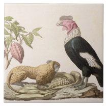 Lion monkey and condor, native to Chile or Ecuador Tile