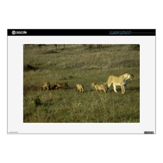 LION MOTHER AND CUBS LAPTOP DECALS