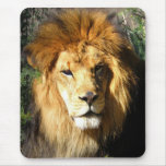 Lion Mouse Mats