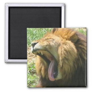 lion mouth magnet