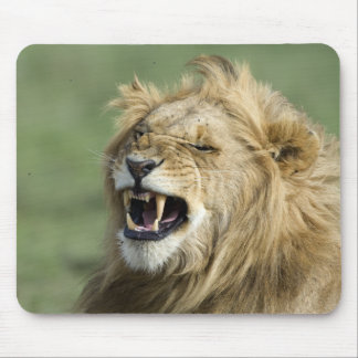 Lion of marks mouse pad