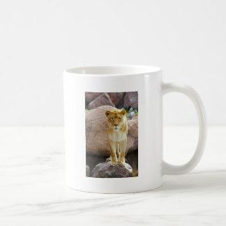 Lion on a rock looking at camera coffee mug