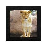Lion on a rock looking at camera keepsake boxes