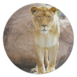 Lion on a rock looking at camera plate
