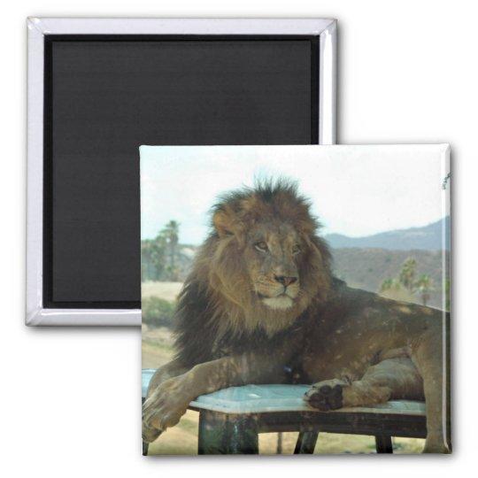 Lion on Car Magnet