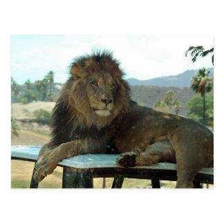 Lion on Car Postcard
