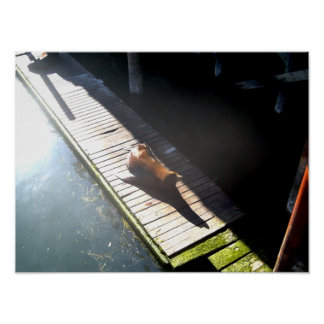 Lion On The Dock Poster