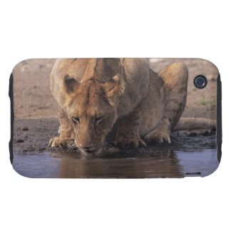 Lion (Panthera leo) at waterhole, Masai Mara Tough iPhone 3 Cases