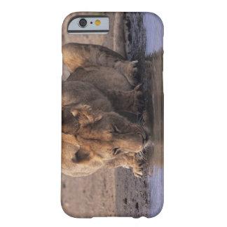 Lion (Panthera leo) at waterhole, Masai Mara Barely There iPhone 6 Case