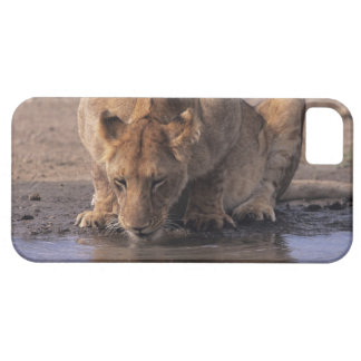 Lion (Panthera leo) at waterhole, Masai Mara iPhone SE/5/5s Case