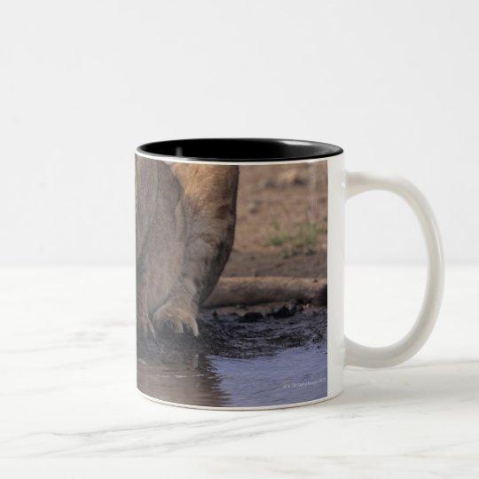 Lion (Panthera leo) at waterhole, Masai Mara Two-Tone Coffee Mug
