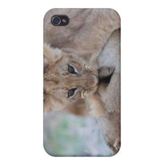Lion (Panthera leo) cub biting mothers ear, Cover For iPhone 4