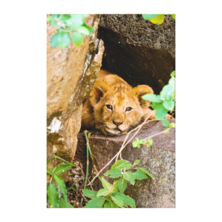Lion (Panthera Leo) Cub In Cave, Maasai Mara Gallery Wrapped Canvas