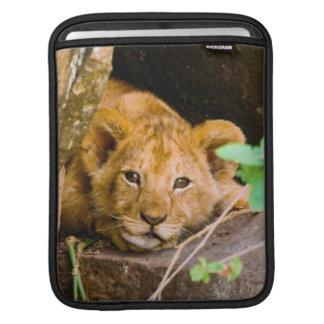 Lion (Panthera Leo) Cub In Cave, Maasai Mara iPad Sleeve