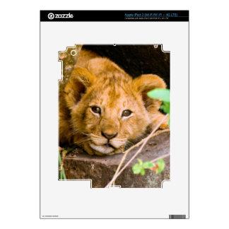 Lion (Panthera Leo) Cub In Cave, Maasai Mara Decal For iPad 3