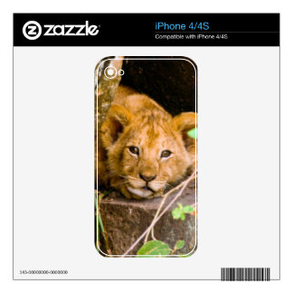 Lion (Panthera Leo) Cub In Cave, Maasai Mara Skin For The iPhone 4