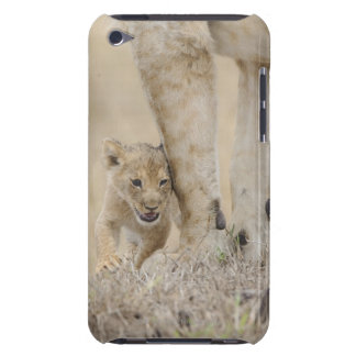 Lion (Panthera leo) cub playing by mothers feet, iPod Touch Cases