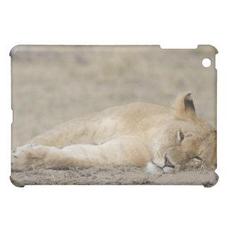 Lion (Panthera leo) cub resting, Masai Mara Game iPad Mini Cover