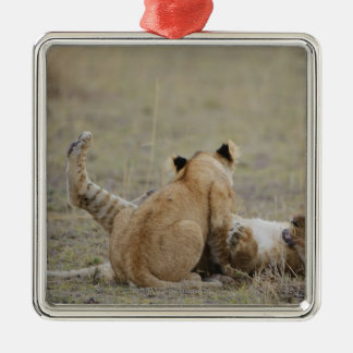 Lion (Panthera leo) cubs playing in grass, Masai Christmas Tree Ornament