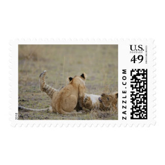 Lion (Panthera leo) cubs playing in grass, Masai Postage