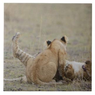 Lion (Panthera leo) cubs playing in grass, Masai Large Square Tile