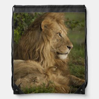 Lion, Panthera leo, Lower Mara, Masai Mara GR, Drawstring Backpack
