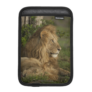 Lion, Panthera leo, Lower Mara, Masai Mara GR, iPad Mini Sleeve