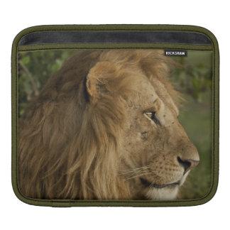Lion, Panthera leo, Lower Mara, Masai Mara GR, iPad Sleeve