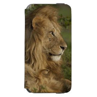 Lion, Panthera leo, Lower Mara, Masai Mara GR, iPhone 6/6s Wallet Case