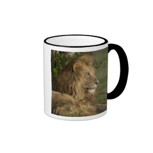 Lion, Panthera leo, Lower Mara, Masai Mara GR, Coffee Mug