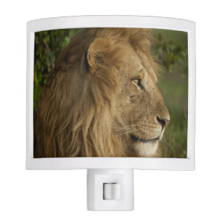Lion, Panthera leo, Lower Mara, Masai Mara GR, Night Light