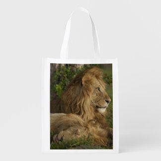 Lion, Panthera leo, Lower Mara, Masai Mara GR, Reusable Grocery Bags