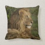 Lion, Panthera leo, Lower Mara, Masai Mara GR, Throw Pillow