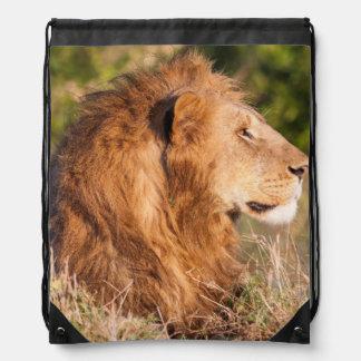 Lion (Panthera Leo) Maasai Mara, Kenya, Africa Drawstring Bag