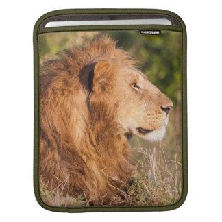 Lion (Panthera Leo) Maasai Mara, Kenya, Africa Sleeve For iPads