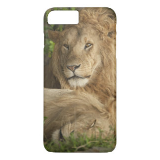 Lion, Panthera leo, males resting iPhone 8 Plus/7 Plus Case