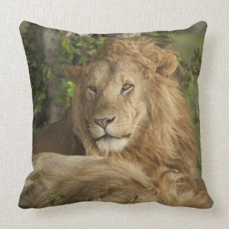 Lion, Panthera leo, males resting Throw Pillow