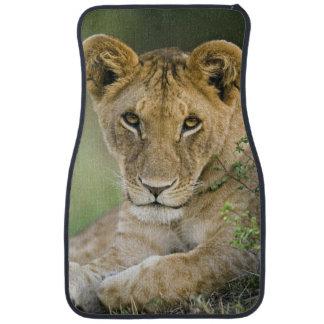 Lion, Panthera leo, Masai Mara, Kenya Car Mat