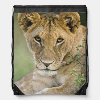 Lion, Panthera leo, Masai Mara, Kenya Drawstring Backpack