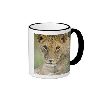 Lion, Panthera leo, Masai Mara, Kenya Ringer Coffee Mug