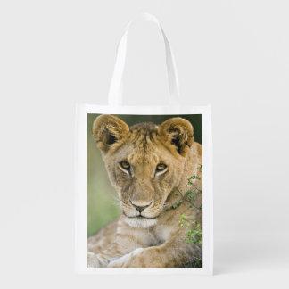 Lion, Panthera leo, Masai Mara, Kenya Reusable Grocery Bags