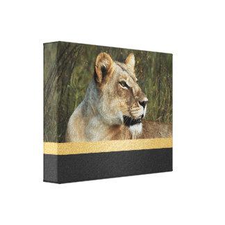 Lion panthera leo Okavango Delta Botswana Canvas Print
