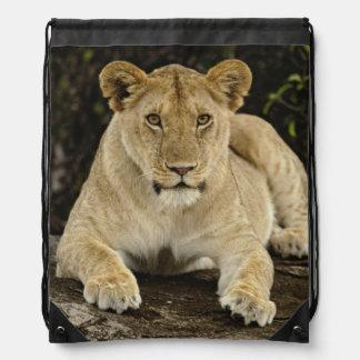 Lion, Panthera leo, Serengeti National Park, Drawstring Bag