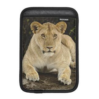 Lion, Panthera leo, Serengeti National Park, iPad Mini Sleeve