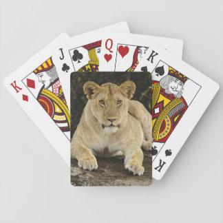 Lion, Panthera leo, Serengeti National Park, Playing Cards
