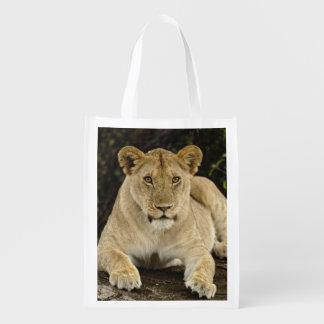 Lion, Panthera leo, Serengeti National Park, Reusable Grocery Bag