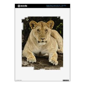 Lion, Panthera leo, Serengeti National Park, Skins For iPad 3