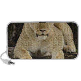 Lion, Panthera leo, Serengeti National Park, Travel Speaker