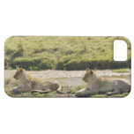 lion (Panthera leo),two young lioness, Masai iPhone 5 Cover